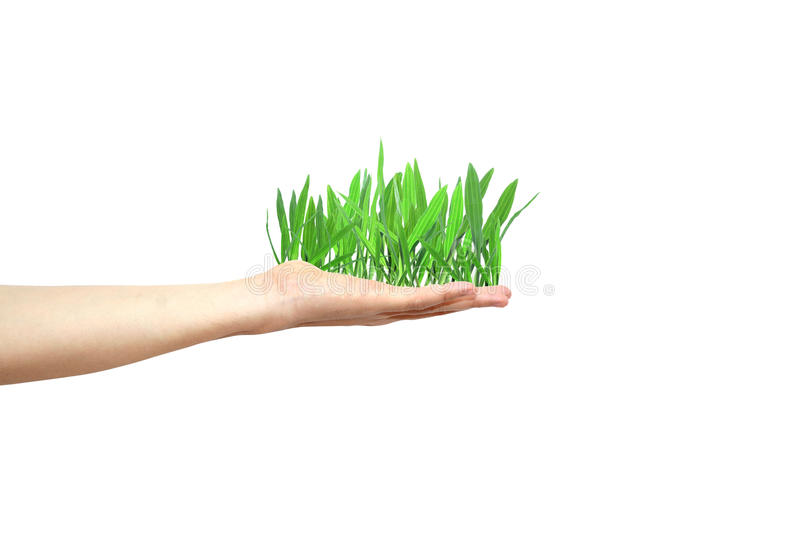 Download Green Grass Growing In Hand Stock Photo - Image: 22477976