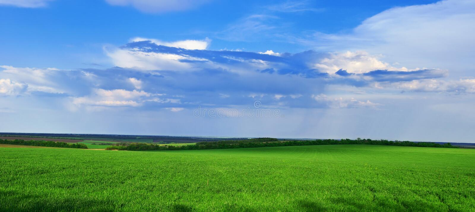 Download Green Grass Grows On The Field Stock Image - Image: 23774173