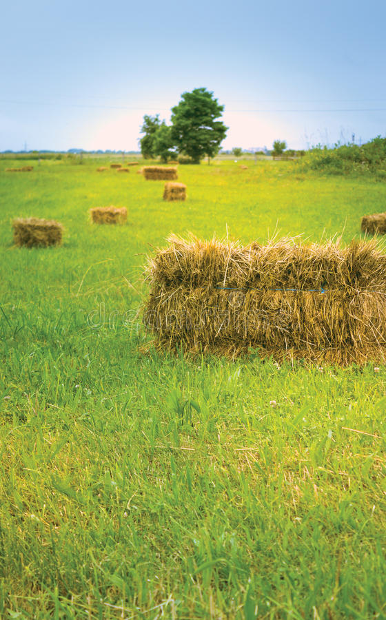 Green Grass and Hay royalty free stock photo