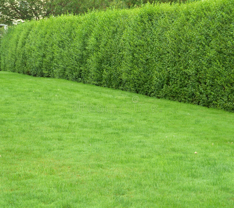 Green grass with hedges. Plain green grass with hedges stock photo