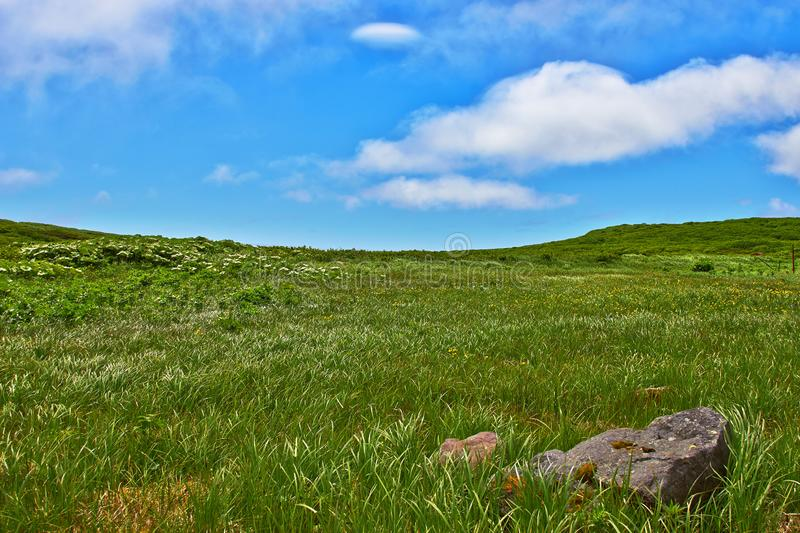 Green grass hill stock images