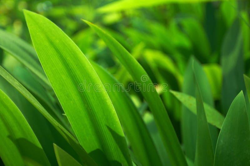 Green grass (horizontal) royalty free stock photos