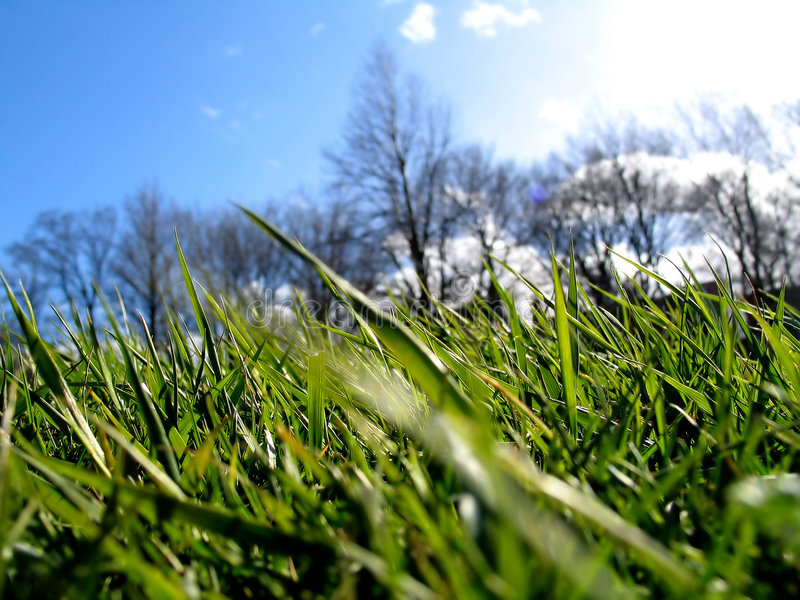 Download Green Grass II stock image. Image of trees, cloud, vegetation - 3285