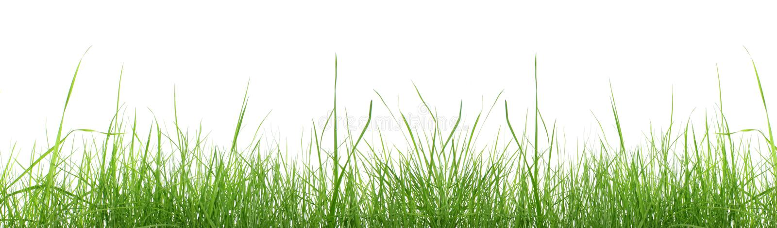 Green grass isolated. stock image