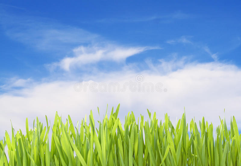 Download Green Grass Isolated With Clipping Path Stock Photo - Image: 12722098