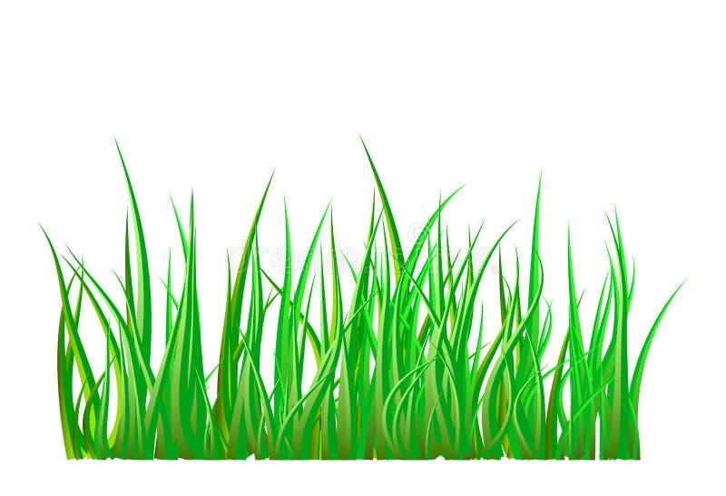 Green grass isolated vector symbol icon design. stock illustration