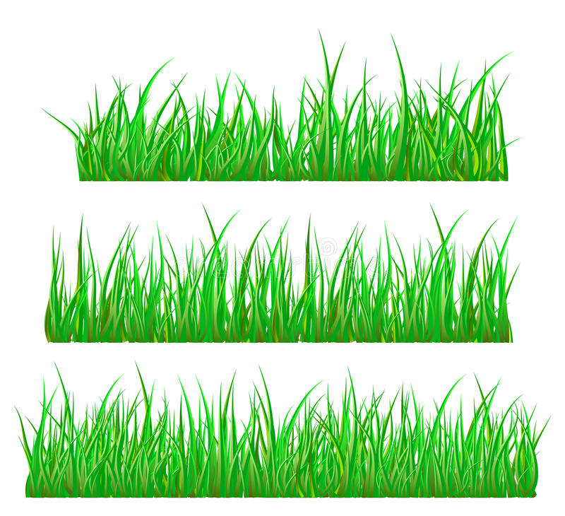 Green grass isolated vector symbol icon design. royalty free illustration