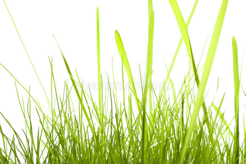 Download Green Grass Isolated On White Stock Photo - Image: 7374340