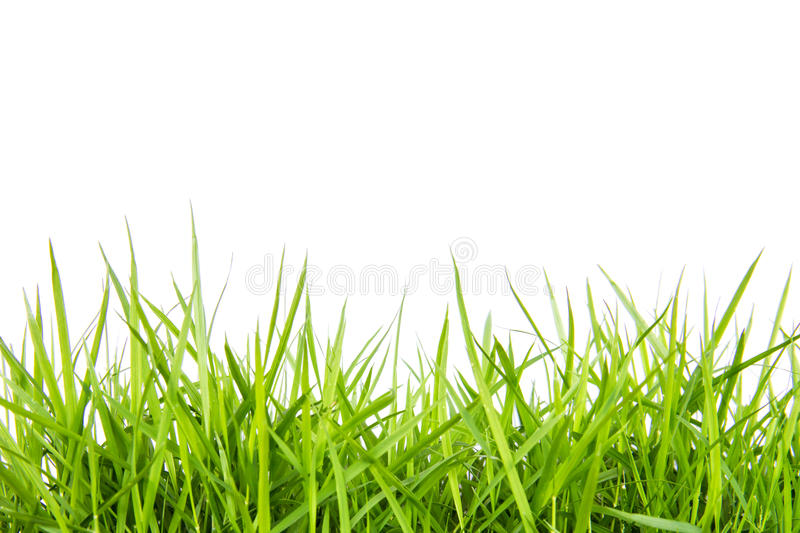 Download Green grass stock photo. Image of fresh, green, abstract - 33369910