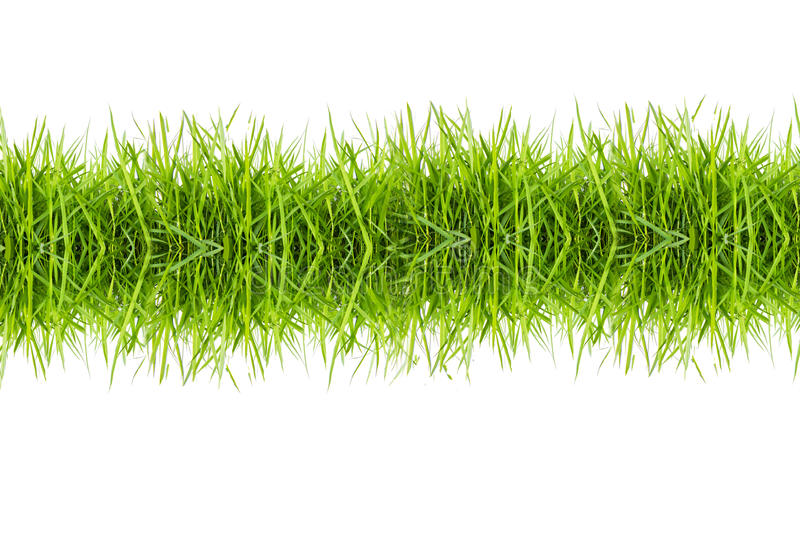 Download Green Grass Isolated On White Background Stock Image - Image: 33370419
