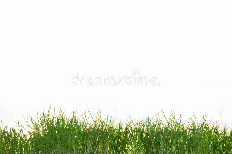 Green grass isolated on white background royalty free stock photos