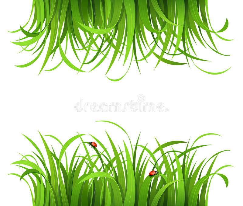 Download Green grass with ladybirds stock vector. Image of abstract - 26388223