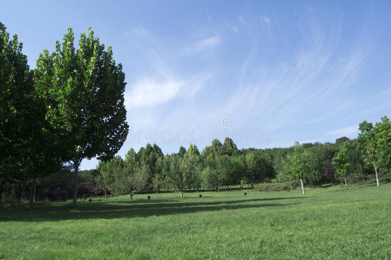 Green grass landscape. Green grass and trees landscape outdoor stock photography