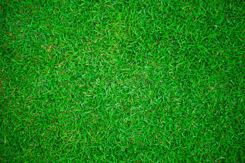 Green grass lawn background and texture for wallpaper and presentation. Green grass lawn background and texture for wallpaper and product presentation or other stock photos