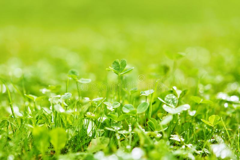 Green grass lawn blurred after a rain stock photography