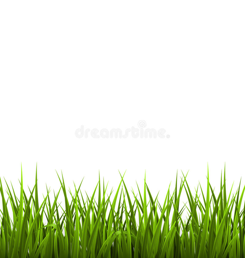 Green grass lawn isolated on white. Floral nature spring. Background royalty free illustration