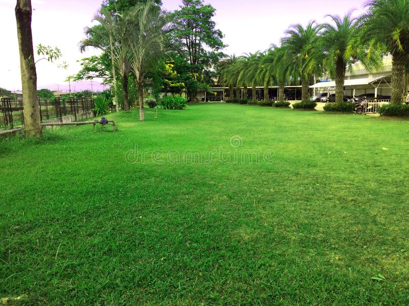 Green grass Lawn and paths. Forest green park royalty free stock images
