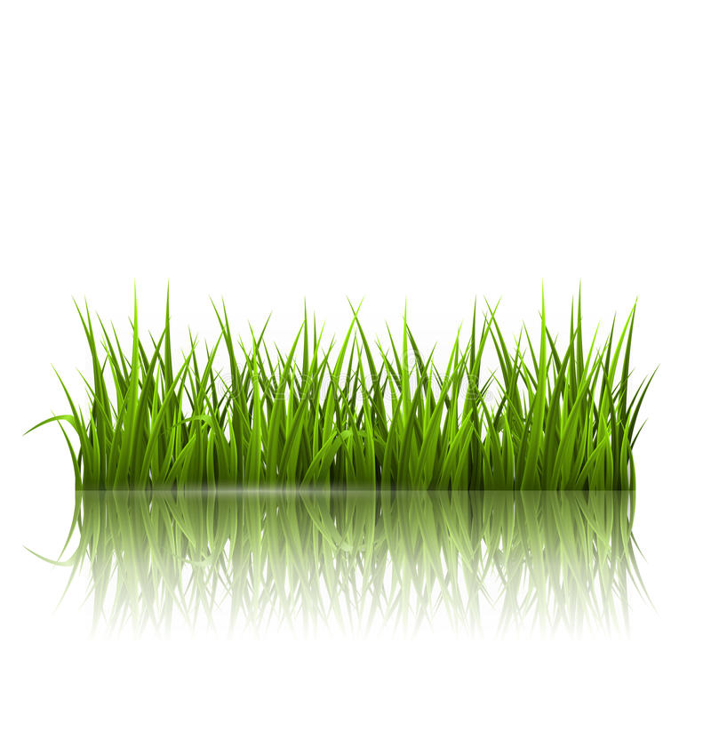 Green grass lawn with reflection on white. Floral nature spring. Background vector illustration