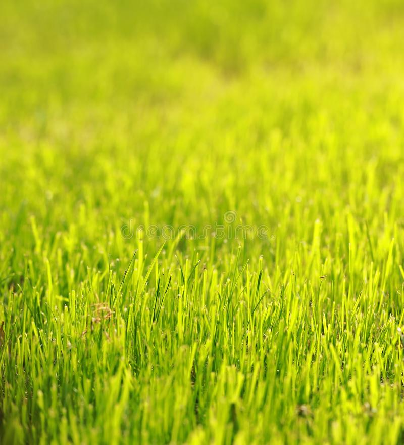 Green grass lawn in summer spring autumn fall winter park garden at sunny day sunshine and hope peace concept. Green grass lawn in summer spring park garden at royalty free stock image