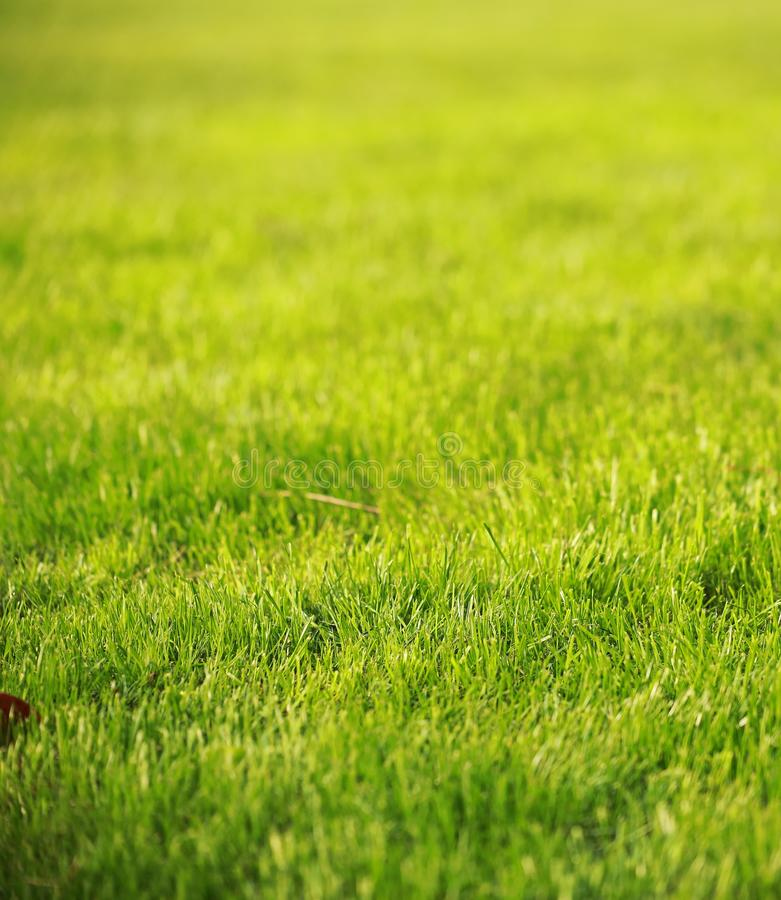 Green grass lawn in summer spring autumn fall winter park garden at sunny day sunshine and hope peace concept. Green grass lawn in summer spring park garden at stock images