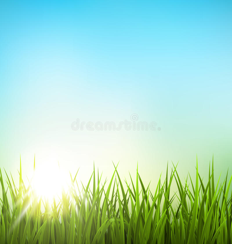 Green grass lawn with sunrise on blue sky. Floral nature spring stock illustration