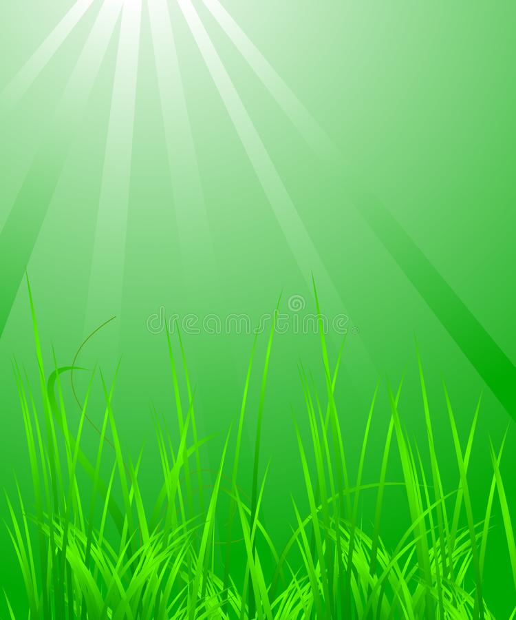 Green grass in the light royalty free stock image