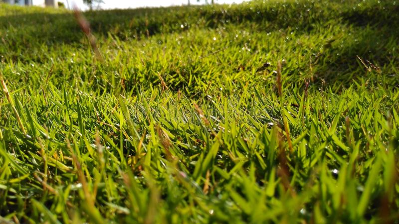 Green Grass Macro Lanscape. A high resolution macro shot of grass stock photography