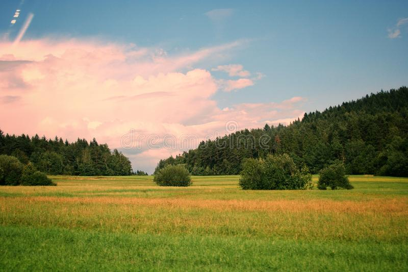 Green grass and meadow, in the background bushes, trees and forest in Poland. Beautiful blue sky. On a sunny day stock photo