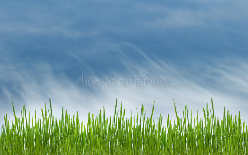 Download Green Grass Meadow And Blue Cloudly Sky Stock Image - Image: 25545947