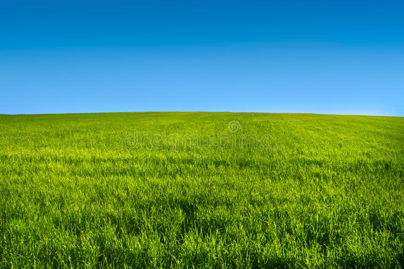 Green grass meadow with blue sky r royalty free stock images