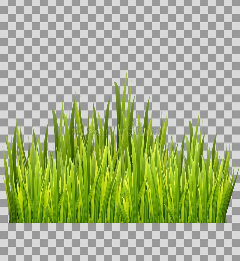 Green grass meadow bottom border isolated on transparent background. Decoration element. vector illustration