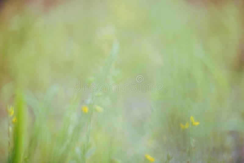 Green Grass Meadow Close-Up With Bright Sunlight stock photography