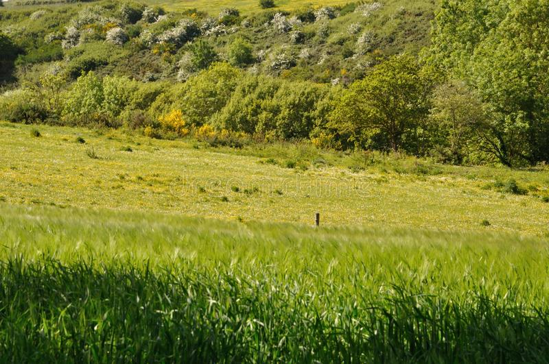 Grass meadow woody hedgerow royalty free stock photo