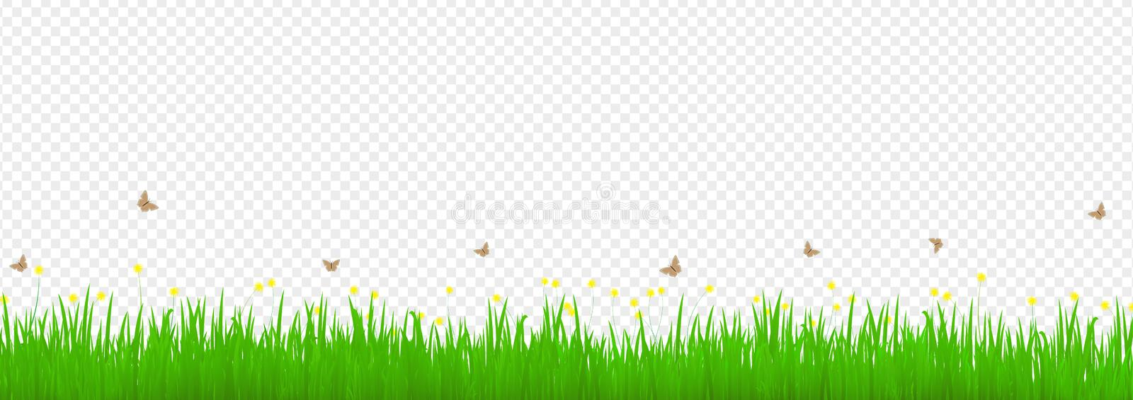Green grass meadow with yellow flowers floral and butterfly on transparent background royalty free illustration
