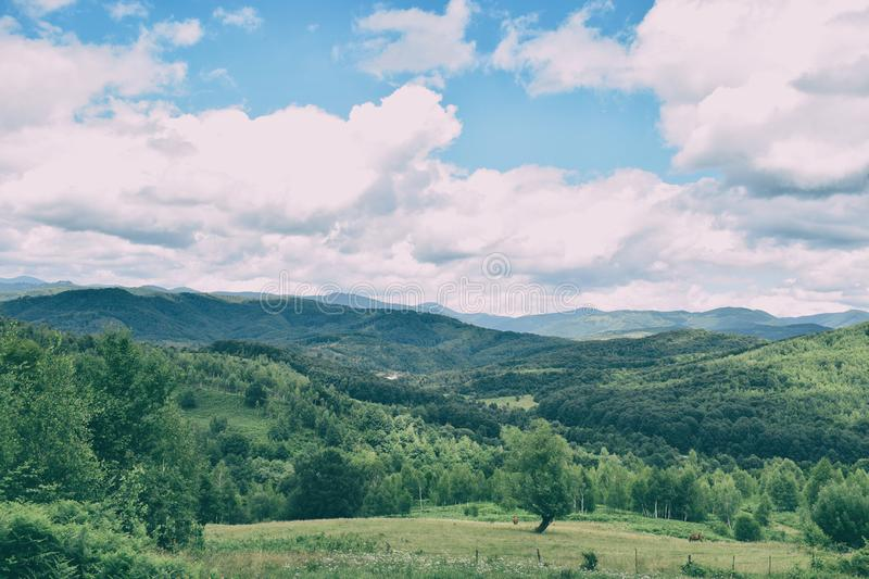 Green grass, mountains peaks covered with forest and cloudy blue sky. Summer mountain landscape royalty free stock images
