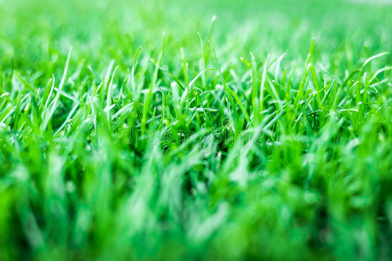 Green grass. natural background texture royalty free stock photography