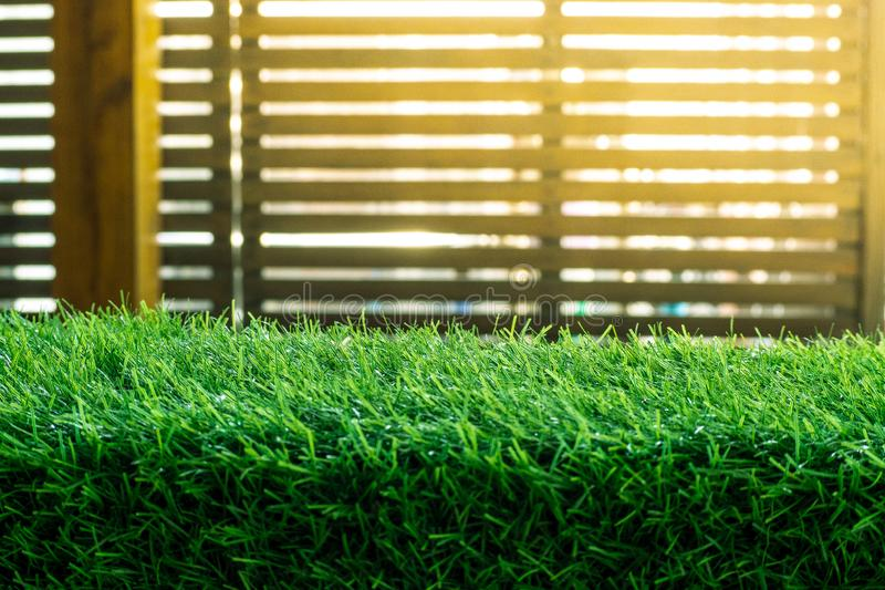 Green grass. natural background texture. fresh spring green grass. - Image royalty free stock photos
