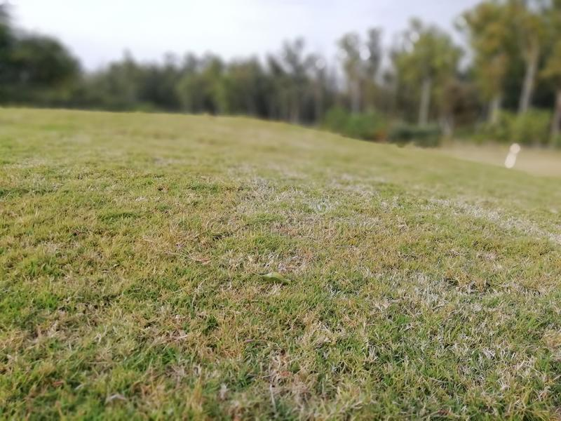 Green Grass Blur Background Stock Images - Download 45,617