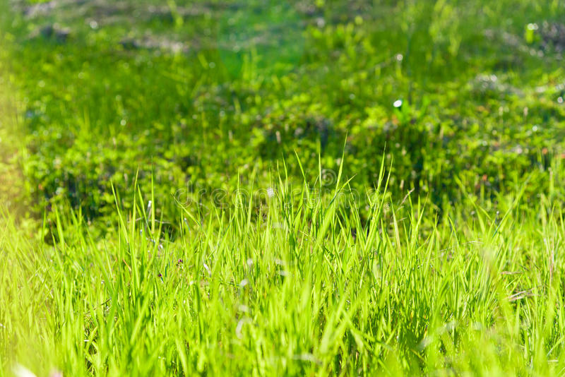 Green grass natural water background texture. stock image