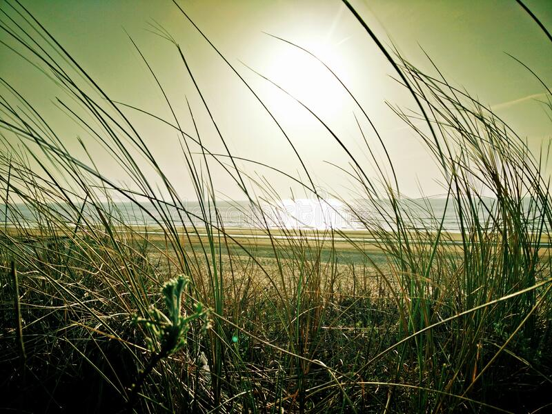 Green Grass Near Beach Under the Sun stock image