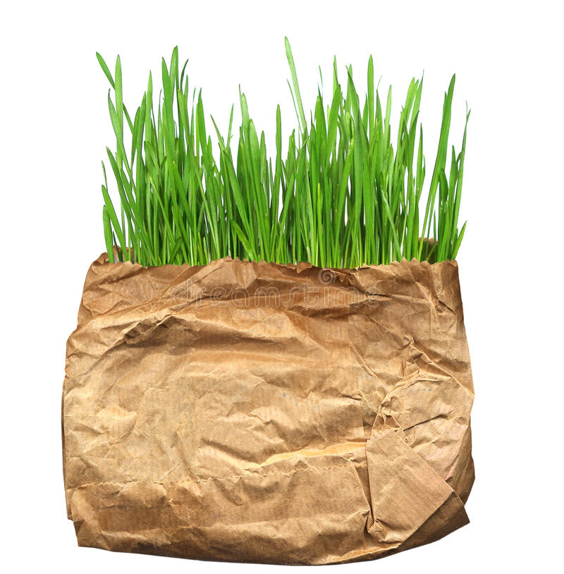 Green grass in the old pack. On the photo: green grass in the old pack stock photo