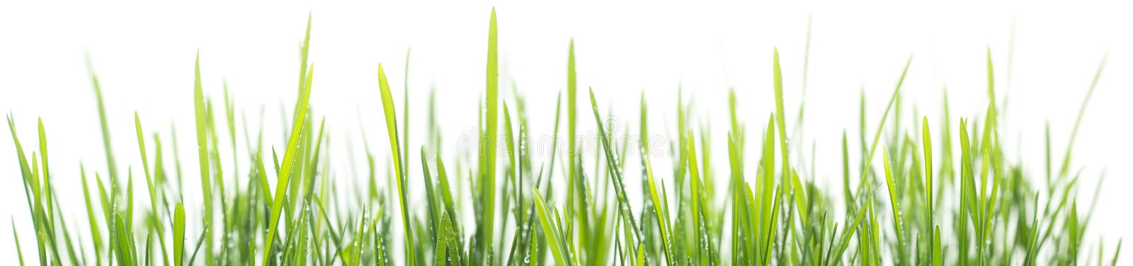 Green grass panorama isolated on white background royalty free stock photography