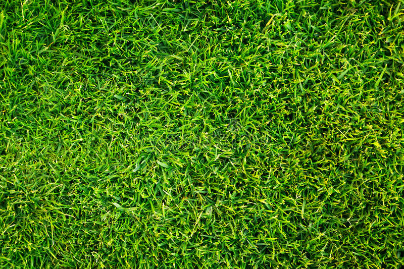 Download Green grass pattern stock photo. Image of lawn, care - 30835994