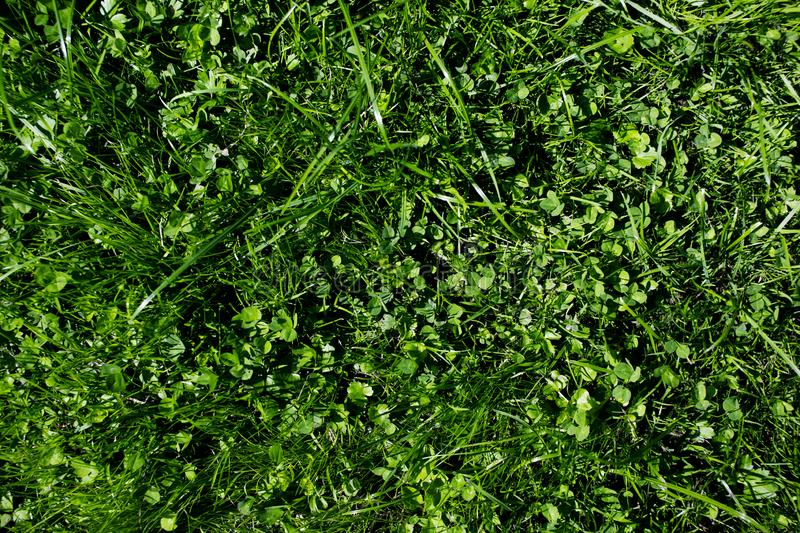 Green grass pattern. Texture for background close-up image stock photo