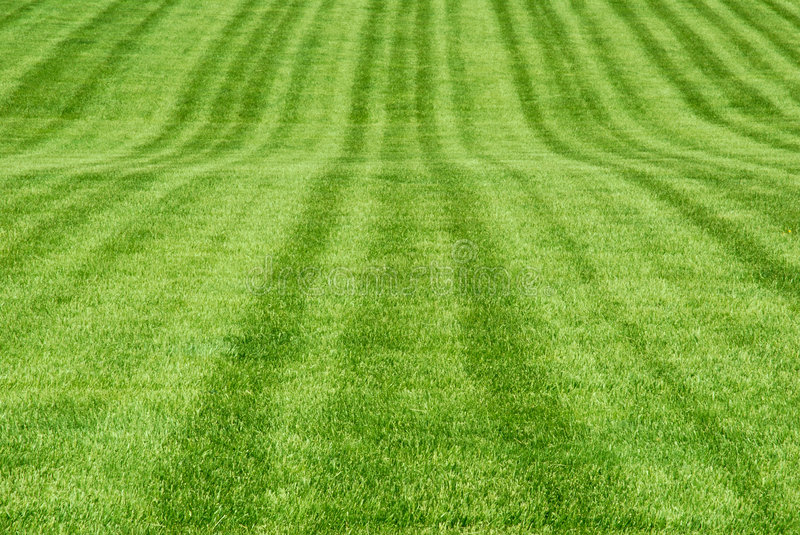 Download Green Grass Patterns stock photo. Image of grassy, spring - 5399026