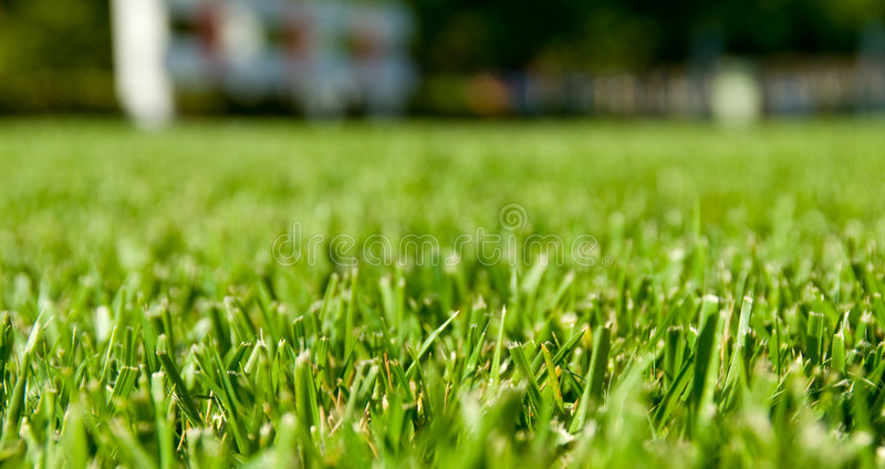 Green Grass Perspective with House In Background stock photography