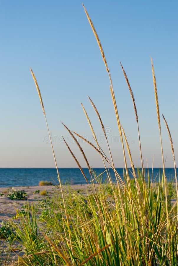 Green vegetation grass on a background of beach, sea, sky. Green grass plant bush on a background of yellow sand and blue sea, clear sky, plants in a nature stock photos