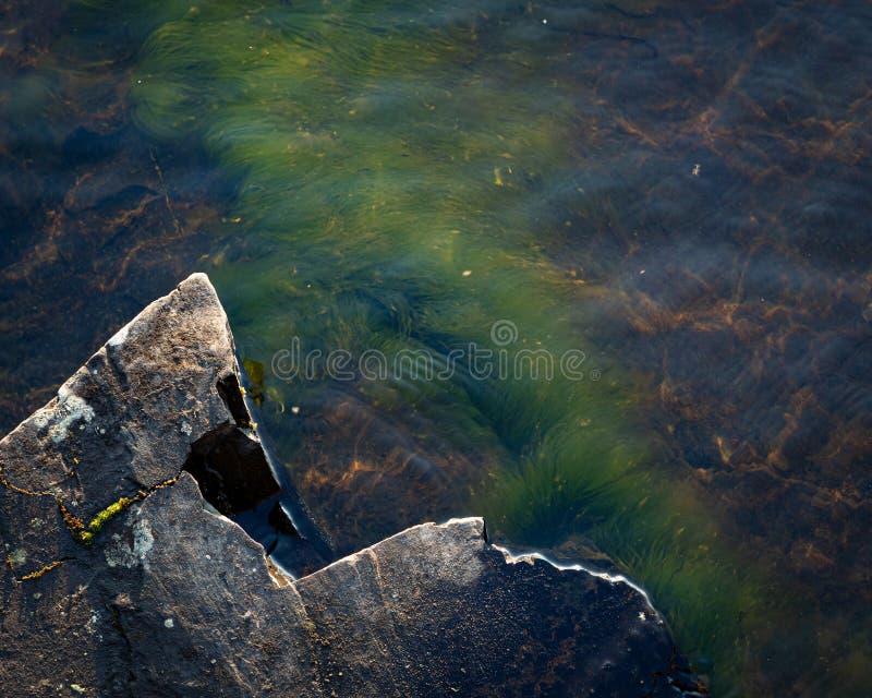 Green grass plant growing underwater on bedrock stock image