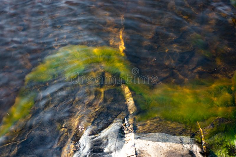 Green grass plant growing underwater on bedrock stock images