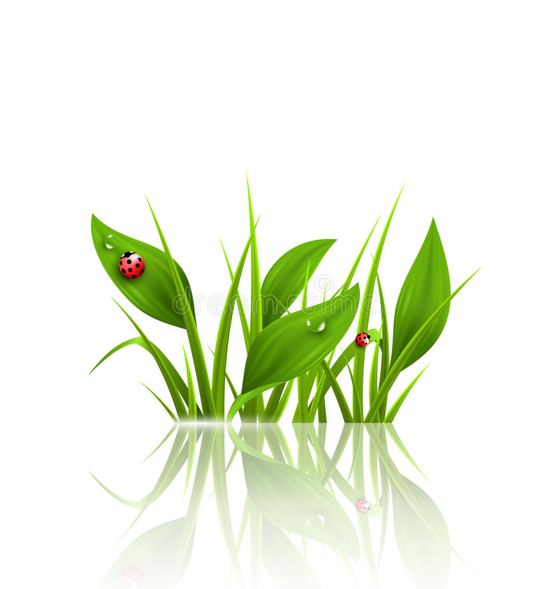 Green grass, plantain and ladybugs with reflection on white. Flo. Ral nature spring background stock illustration